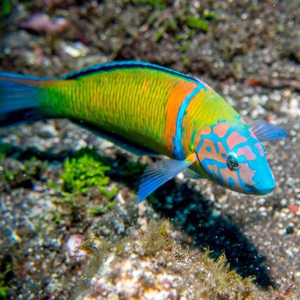 Ein bunter Fisch